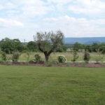 plantation haie mixte