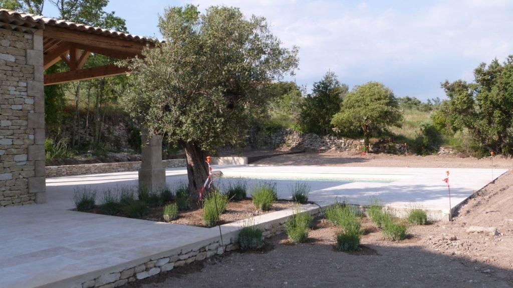 plantation d\'un olivier et de lavandes | Expression Paysagère