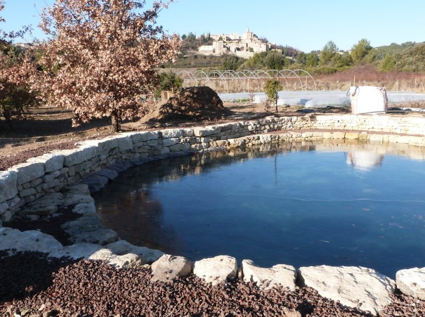 bassin baignade paysagiste